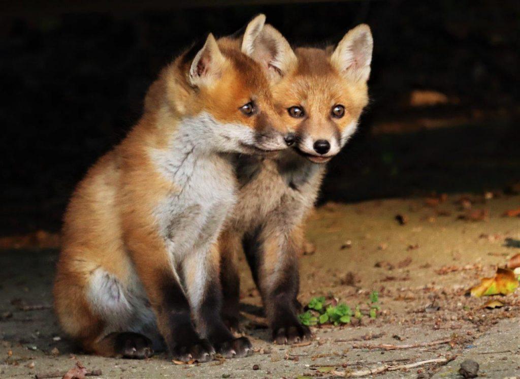 David Read Fox2